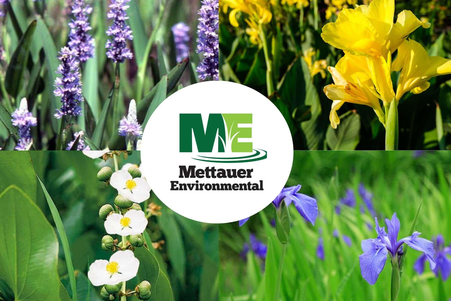 Mettauer Environmental logo with emergent plants